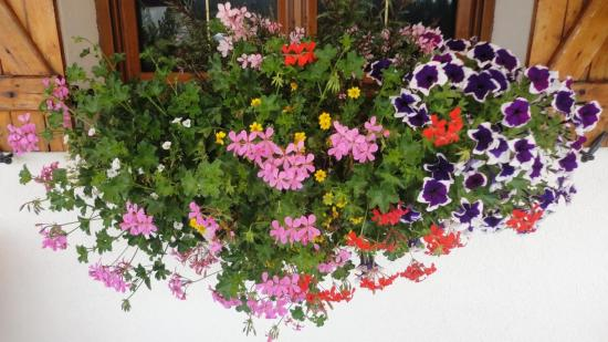 Fleurissement particuliers for Plantes de balcon plein soleil