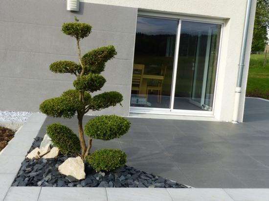 Aménagement terrasse arbre formé